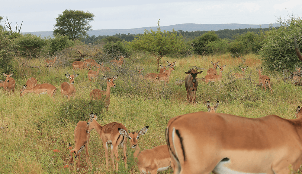 , Safari en África con niños