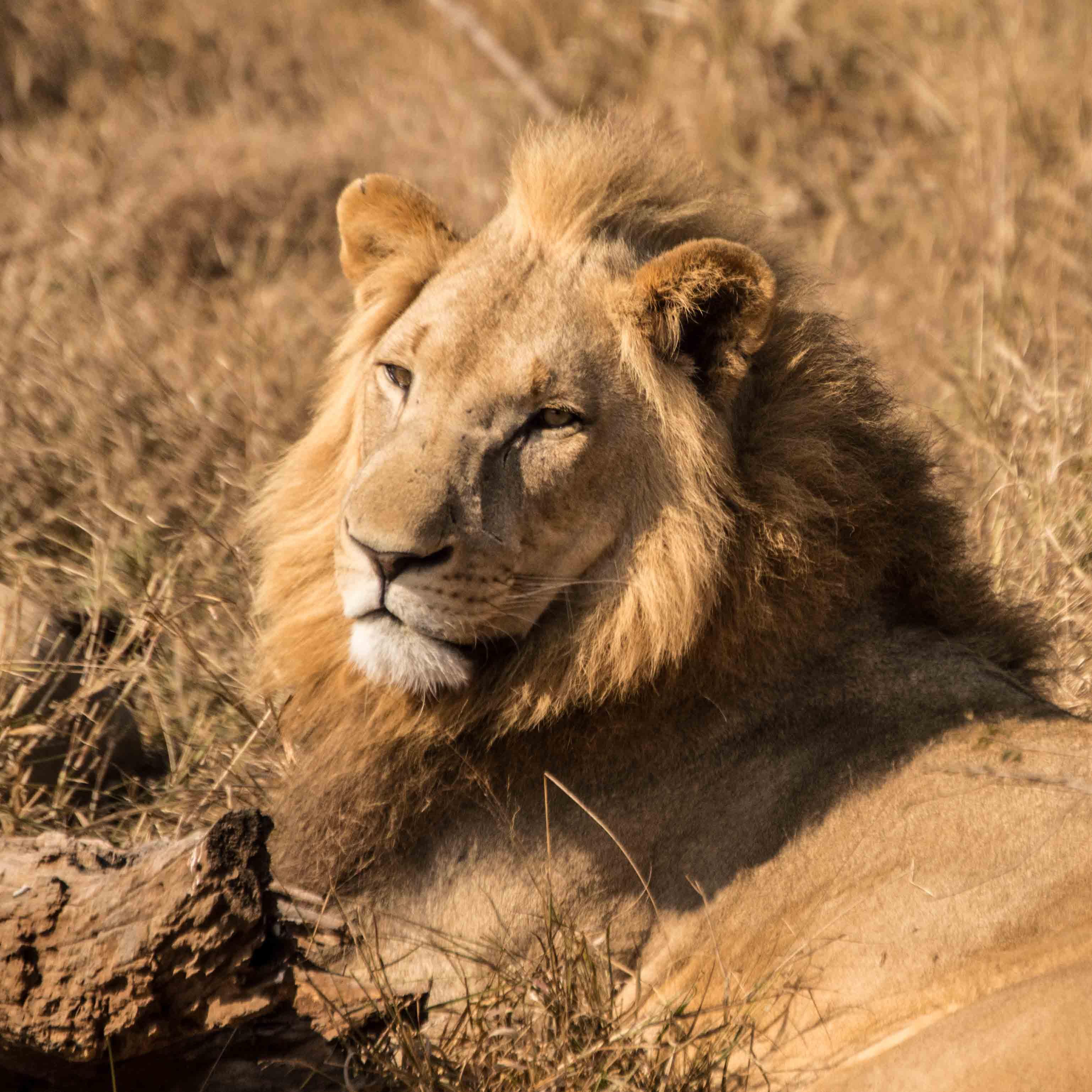 , Safari de Lujo en África