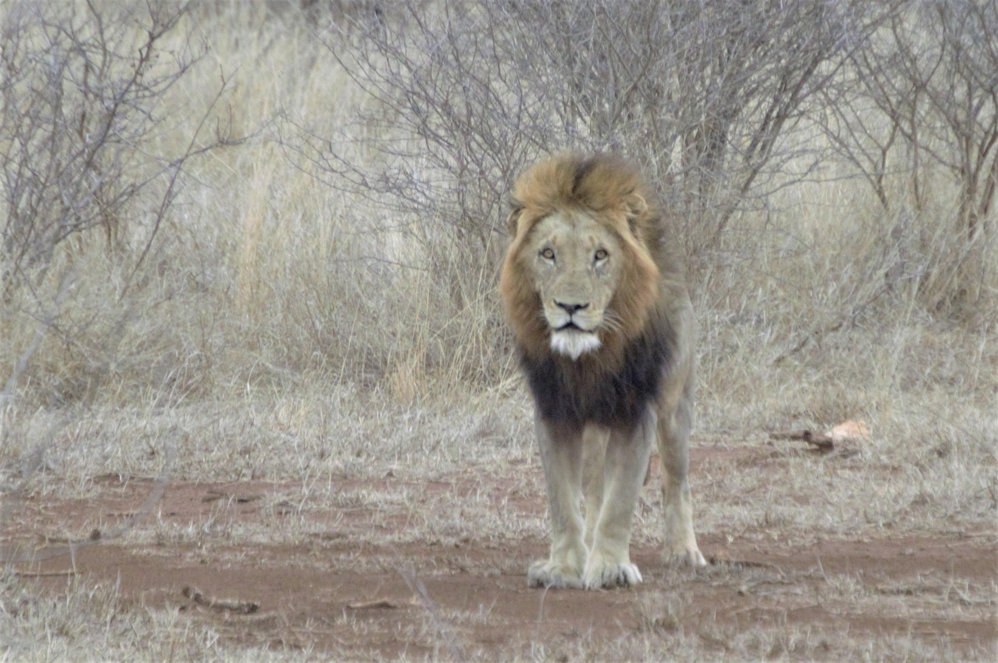 , Safaris por el Parque Kruger