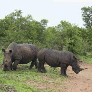 RESERVAS DE SWAZILANDIA – LA CITA CON SU FAUNA Y CULTURA
